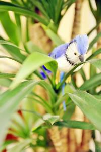 銀座コレージュ・青い鳥